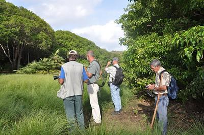 Mango bos bij Sta Cruz, Curacao