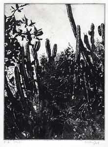 9. Mondi met cactussen.  Bert Kienjet