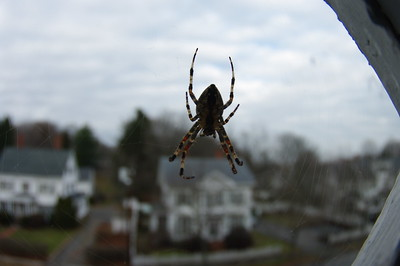 Spider at the Apartment