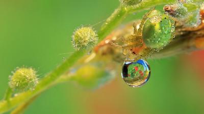 Green Spider ,Big Drop by Bruno SUIGNARD