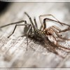 Spider Molting II