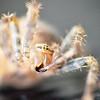 Spider Tasting