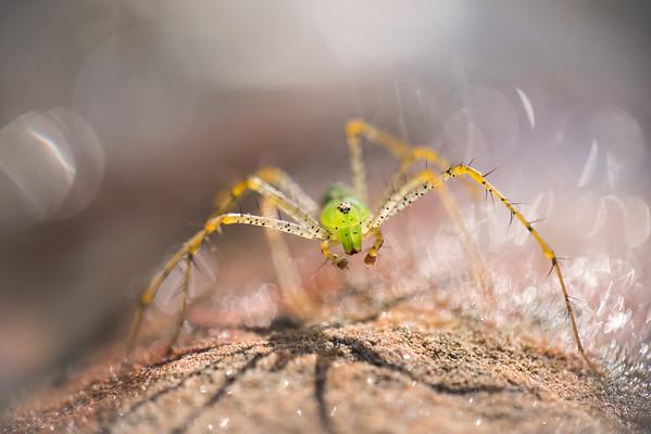 Arachnid Rain Dance