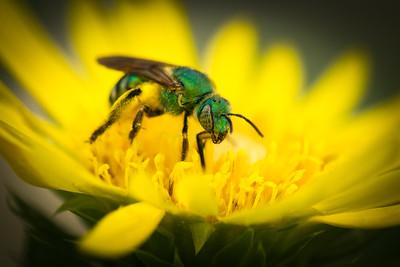 Dennis Stewart - Green Bee