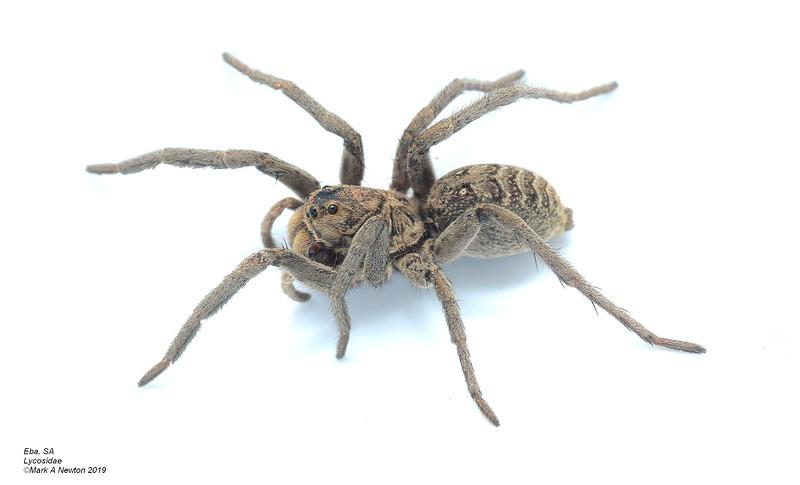 Unknown species 3