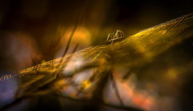 Spiders-Arachnids-188.jpg