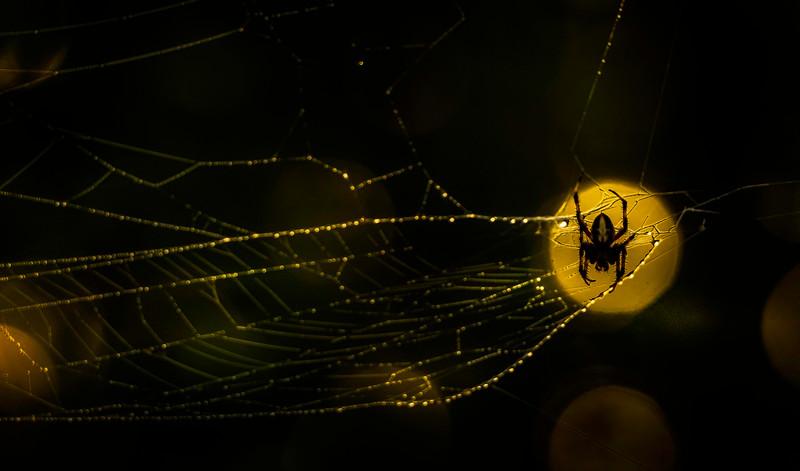 Spiders-Arachnids-136.jpg