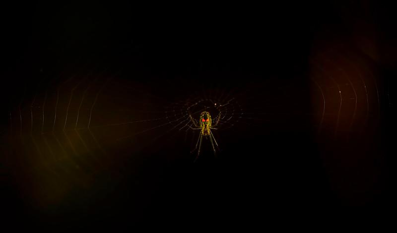 Spiders-Arachnids-107.jpg