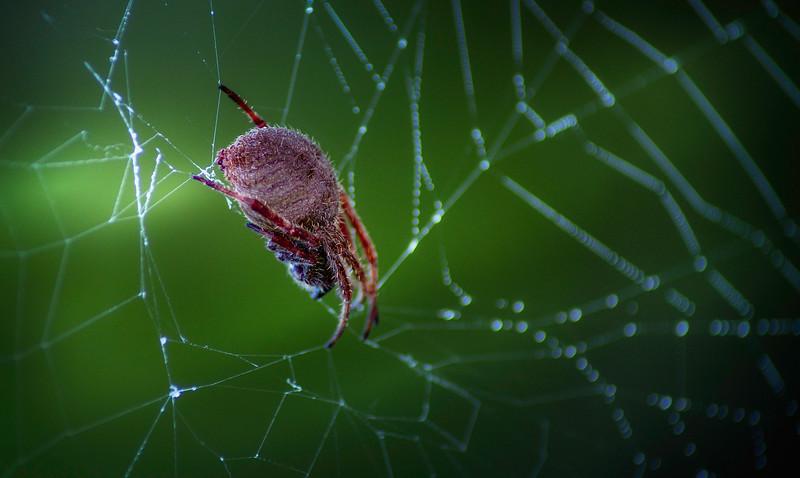 Spiders-Arachnids-089.jpg