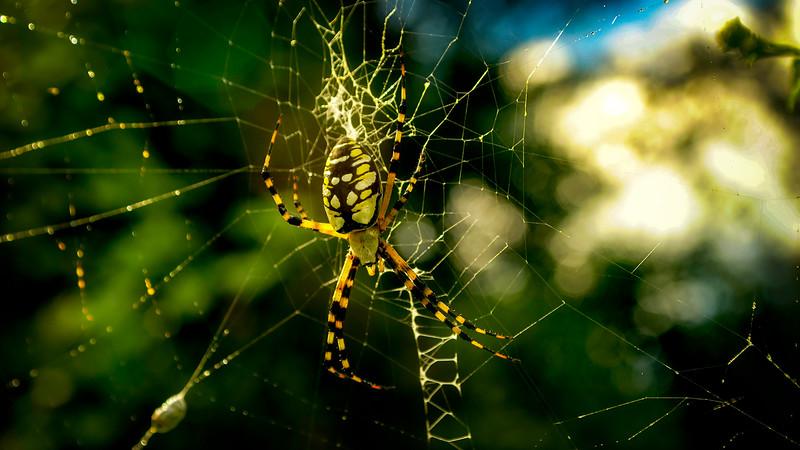 Spiders-Arachnids-084.jpg