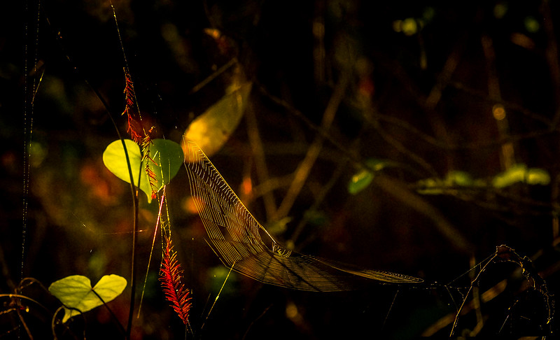 Spiders-Arachnids-105.jpg
