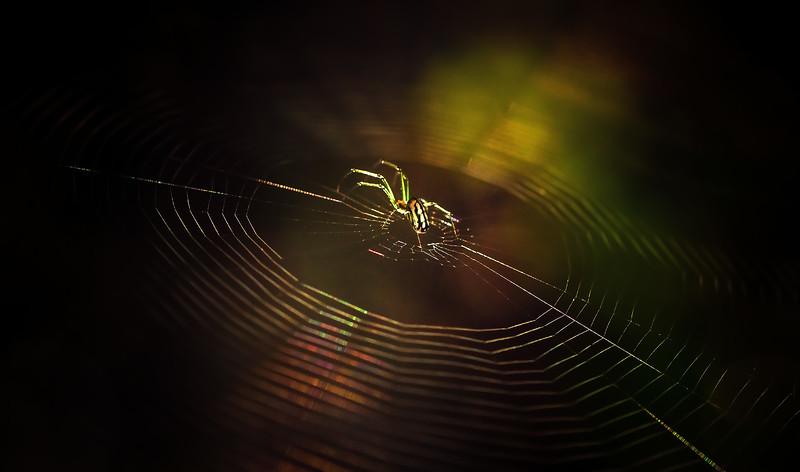 Spiders-Arachnids-190.jpg
