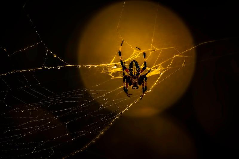 Spiders-Arachnids-135.jpg