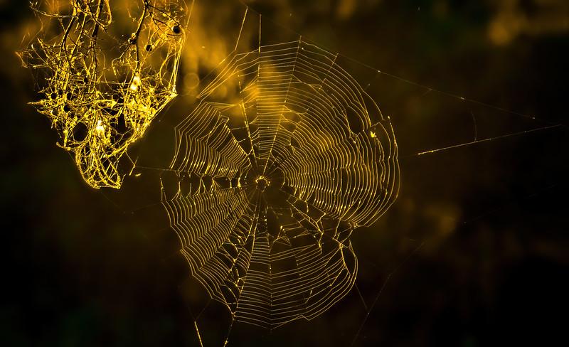 Spiders-Arachnids-185.jpg