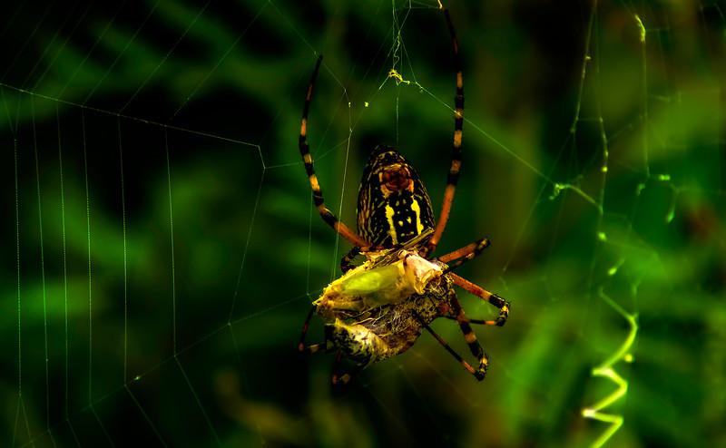 Spiders-Arachnids-027.jpg