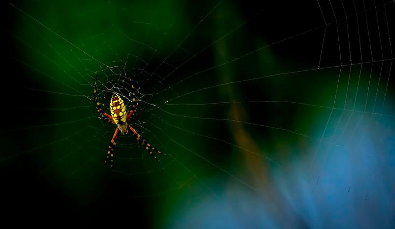 Spiders-Arachnids-149.jpg