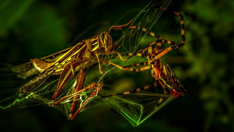 Spiders-Arachnids-051.jpg