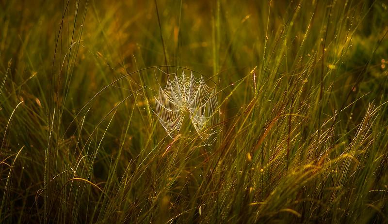 Spiders-Arachnids-181.jpg