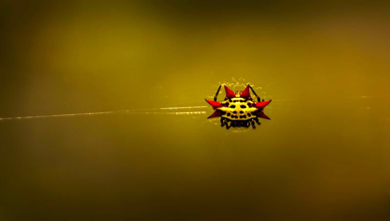 Spiders-Arachnids-102.jpg