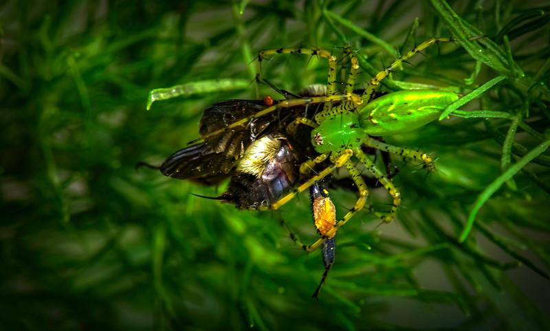 Spiders-Arachnids-038.jpg