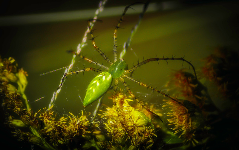 Spiders-Arachnids-083.jpg