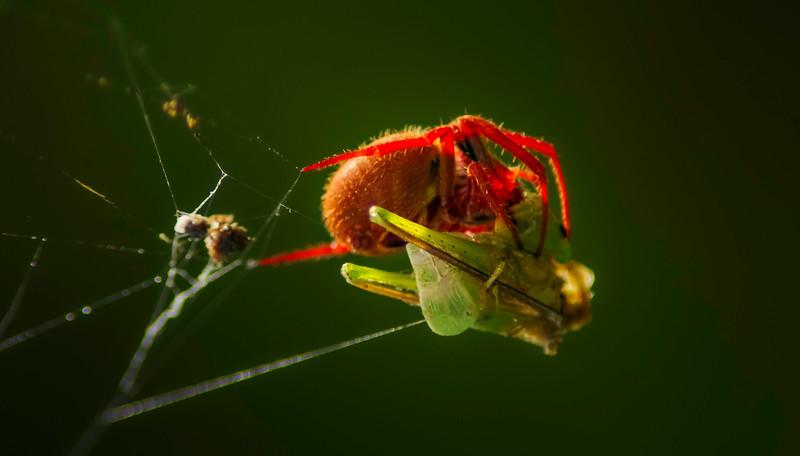 Spiders-Arachnids-024.jpg