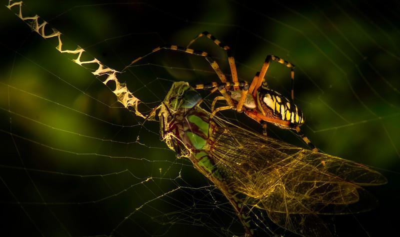 Spiders-Arachnids-031.jpg