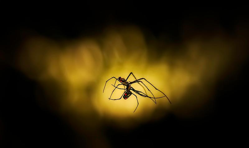 Spiders-Arachnids-118.jpg