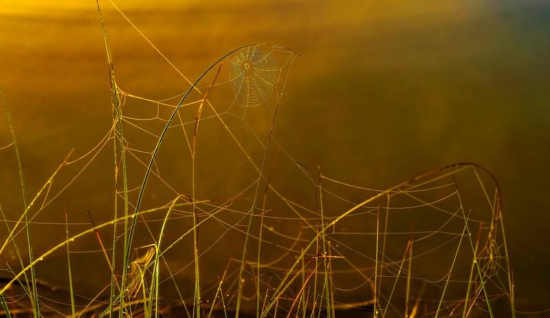 Spiders-Arachnids-179.jpg