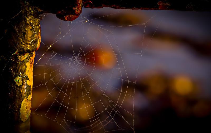 Spiders-Arachnids-176.jpg