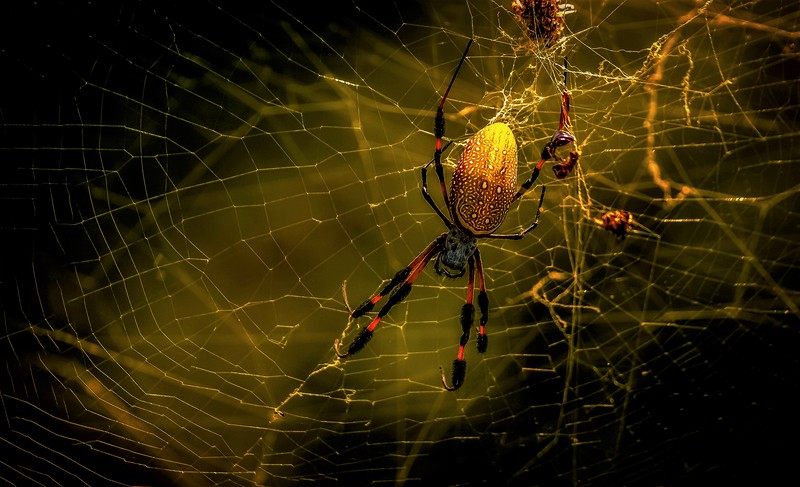 Spiders-Arachnids-175.jpg