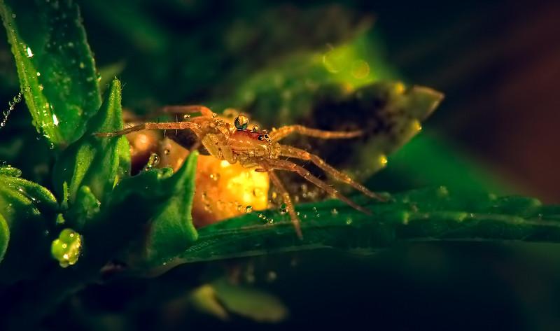 Spiders-Arachnids-184.jpg
