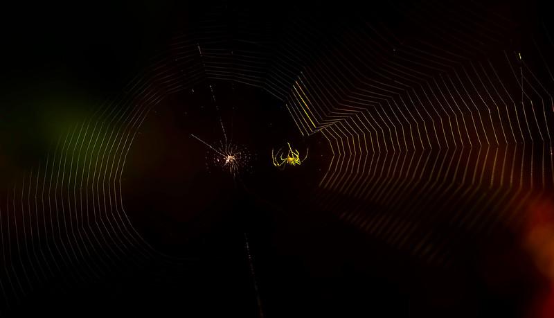 Spiders-Arachnids-106.jpg