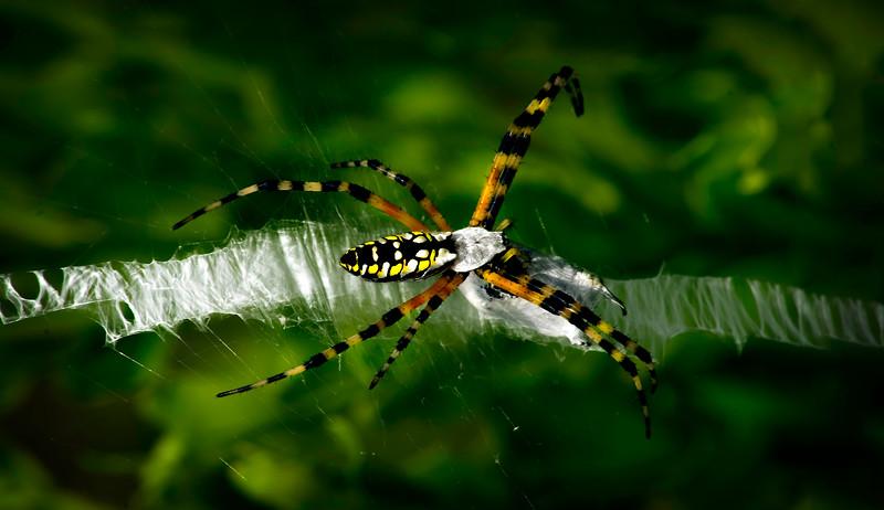 Spiders-Arachnids-019.jpg