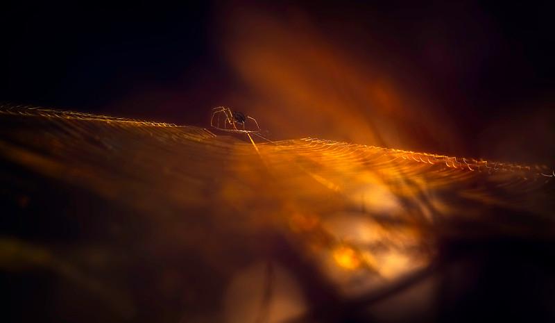 Spiders-Arachnids-094.jpg