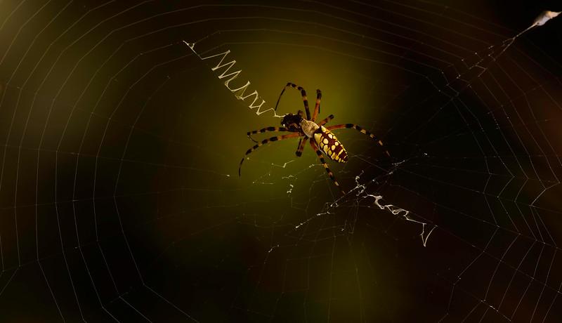 Spiders-Arachnids-131.jpg