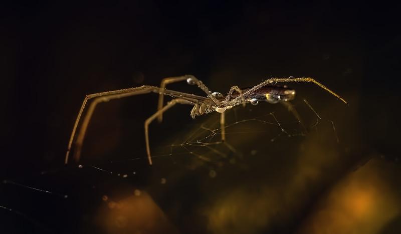 Spiders-Arachnids-182.jpg