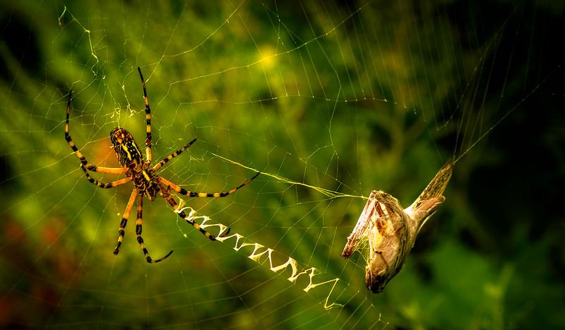 Spiders-Arachnids-028.jpg