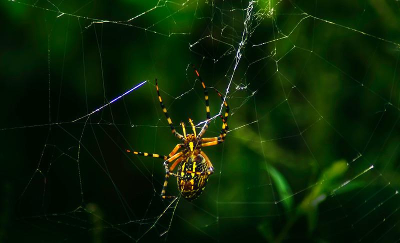 Spiders-Arachnids-037.jpg