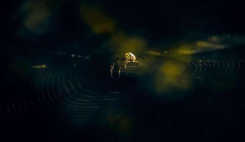 Spiders-Arachnids-109.jpg
