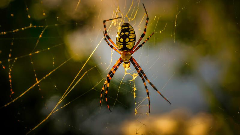Spiders-Arachnids-085.jpg