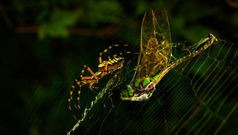 Spiders-Arachnids-012.jpg