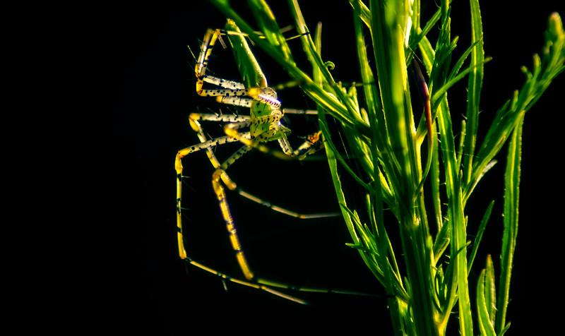 Spiders-Arachnids-022.jpg