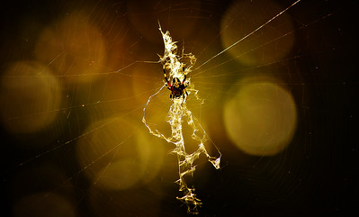 Spiders and Webs by Ray Bilcliff - www.trueportraits.com