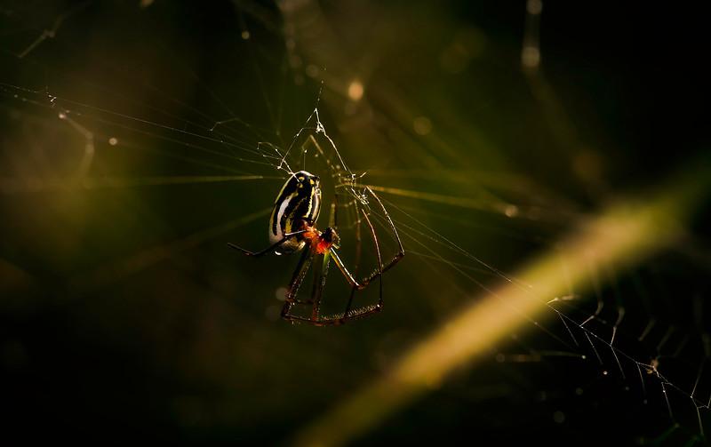 Spiders-Arachnids-093.jpg