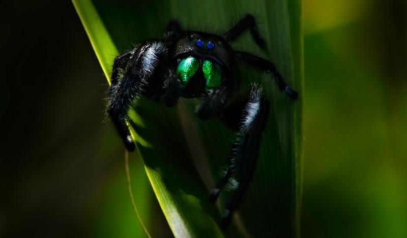 Spiders-Arachnids-008.jpg