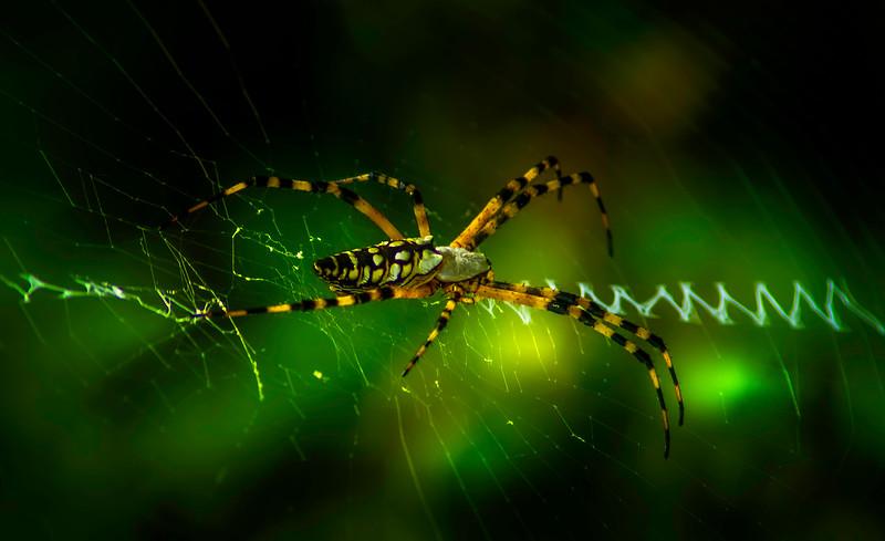 Spiders-Arachnids-052.jpg