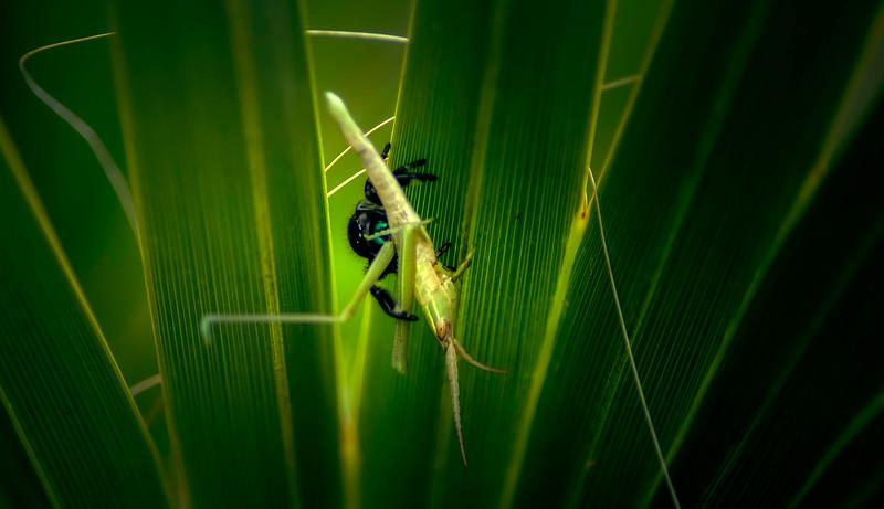 Spiders-Arachnids-020.jpg