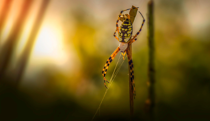 Spiders-Arachnids-013.jpg