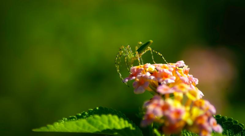 Spiders-Arachnids-091.jpg